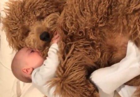 【愛】抱き合って眠る大型犬と赤ちゃん、幸せそうな表情がたまらないw