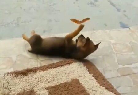 【動画】子犬と仲良くしたいちょうちょが話題に「素敵すぎる‥」