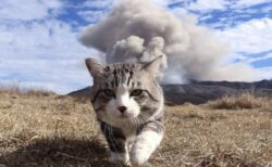 【w】一仕事やり遂げた感あふれる猫さんが話題に