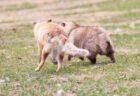 【w】「出かけないで!」通せんぼする犬と、犬が大好きな飼い主さんが可愛いすぎる