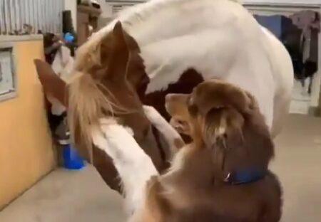 【やさしい】仲良しの馬と犬、見てるだけでほっこりする動画が話題に