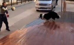 【動画】バレーボールを楽しむ犬とおじさんが話題「すっごい上手!!」