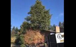 【!】「スギの樹を倒すとこうなる」衝撃GIFが話題に ※日本に26.6億本