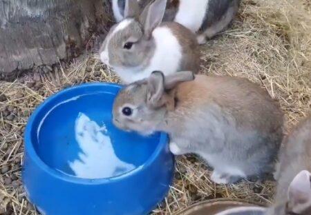 【動画】赤ちゃんうさぎのくしゃみ!めちゃくちゃ可愛いw