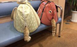 【尾!】動物病院の待合室で激写された奇跡の1枚が話題にw
