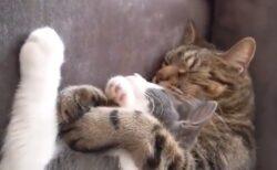 【動画】甘え上手な猫と男前な猫、リア充っぷりが話題にw