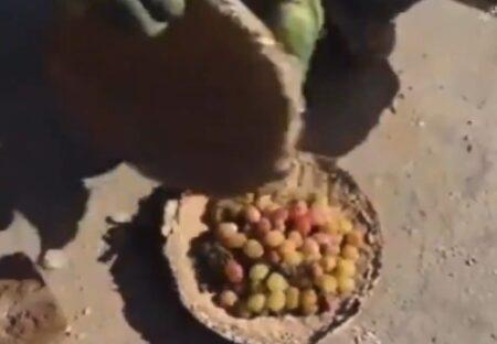 【凄い】泥の容器で空気等を遮断し生の果物を半年保存。アフガニスタン生活の知恵が話題に