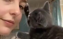 【そーっと】主人の顔を傷つけないようそっと撫でる猫が話題に