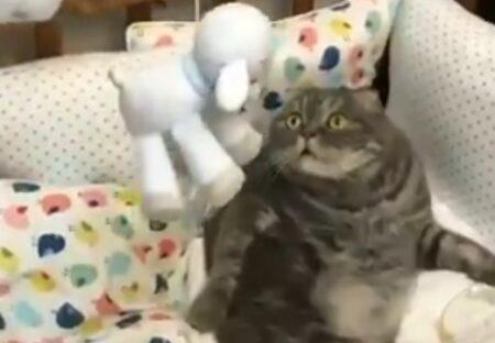 【爆笑】ベッドメリーを見つめる猫の表情が話題に「ずっと見てられるw」