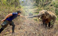 【泣いた】国立公園の象、12年前に自分を助けてくれた獣医を見つけ挨拶に向かう