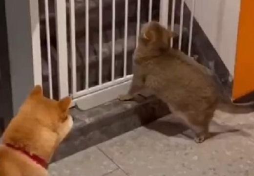 【爆笑】脱走したい猫と全力で止める犬が話題に「犬の表情が見たいw」