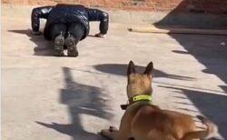 【w】トレーニングを真似る犬が話題に「シンクロ率すごい」「久しぶりに笑ったw」
