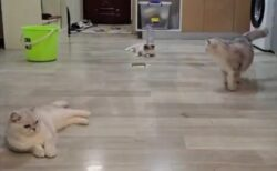 【動画】ファインプレーが凄すぎる猫3匹が話題に「え!」「衝撃のラスト」