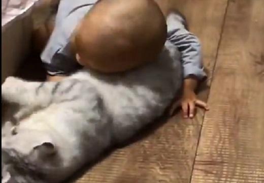 【動画】猫と赤ちゃんの可愛いすぎるじゃれ合いが話題にw