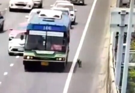 【泣いた】炎天下に高速道路の路肩をフラフラ歩く迷子犬、バスに救助され無事帰宅する