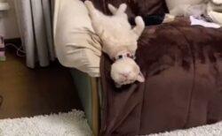 【動画】すごい格好で爆睡する猫が話題に「寝顔も最高w」