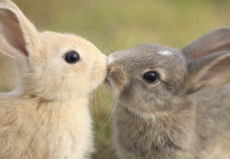 【奇跡ショット】「偶然撮れたうさぎのキス」可愛いすぎるw
