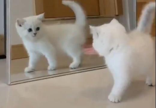 【w】初めて鏡を見た子猫のリアクションが話題に「最後の何w」