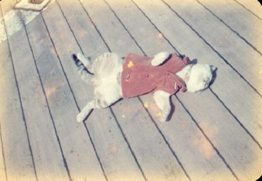 【三毛猫たけし】第1次南極観測隊に同行し、何もしなかった猫が話題に(・∀・)
