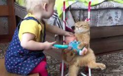 【w】人形を抱いて人形用ベビーカーに座り赤ちゃんのままごとに付き合う猫が話題w