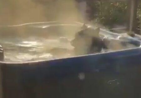 【・(ェ)・】クマがのんびり湯船につかる様子が撮影され話題に「人みたいw」