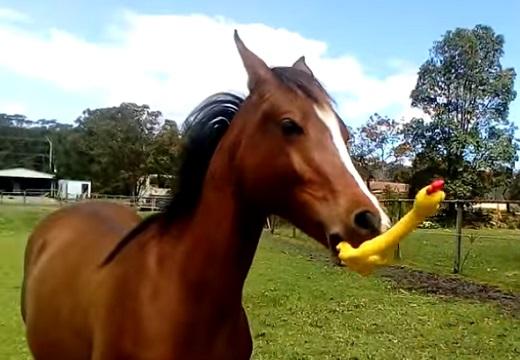 【爆笑】ガーガーチキンで遊ぶ馬が話題に「後半の追い上げすごいw」「声出たw」