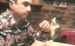 【ねぇねぇ】耳が聞こえないに飼い主にジェスチャーでおねだりする猫が話題に(・∀・)