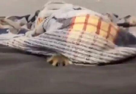 【ぴょこ】毛布から猫が顔を出す瞬間が話題に「想像以上だったw」「声出た」