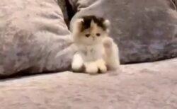 【動画】ちっさい子猫の大あくびが話題に「もう20回ループしてるw」