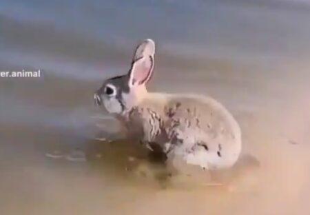 【え】耳を畳んで上手に泳ぐウサギにネット騒然「泳げるんだ!?」