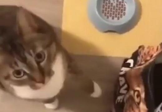 (ΦωΦ)<このカリカリをココに入れて」ごはん催促がスゴい猫が話題にw