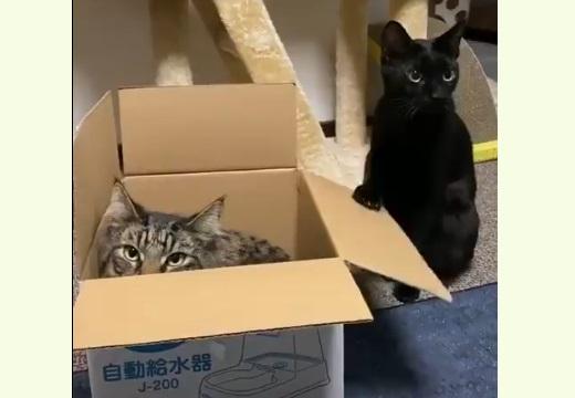 【パタパタパタ】無言で場所交代を催促する猫とガン無視する猫、どっちも可愛いすぎるw