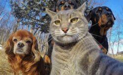 【!】猫が自撮りした写真2枚が話題に「上手すぎ!」「犬の顔w」