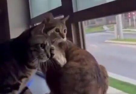 【あれ見て!!】ケンカ中に何かを見つけた猫達が話題に「釘付けw」「なになに?!」