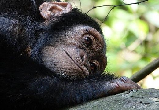 【!】チンパンジーの映像記憶能力にネット騒然「完全敗北」「全部あってる‥」