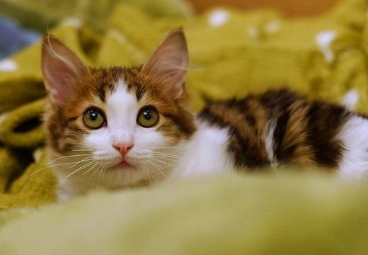 【w】ばら撒いちゃったキャットフードを片付けさせられてる猫が話題に「表情がw」