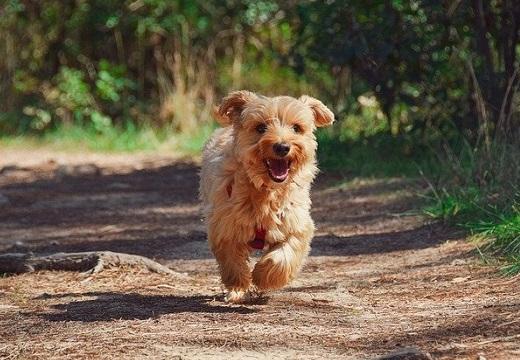 【たまらん】「HAPPY犬の写真を置いてってください」かわいい犬写真が続々とw