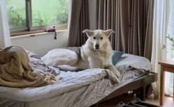 【w】カビキラーを舐めようとして怒鳴られちゃった犬、しょんぼりの顔がカワイイ