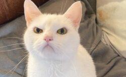 【w】「ぷん!」ってなってる猫が話題に「滅茶苦茶カワイイw」
