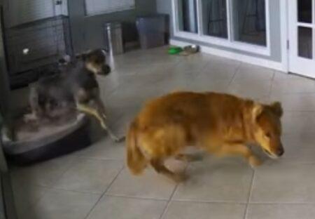 【泣いた】悪夢を見て暴れる犬をやさしく抱きしめて落ち着かせる犬の動画が話題に