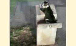 【きてー】助けを求める猫の声が聞こえたので行ってみたら・・w