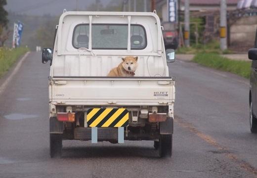 【w】軽トラの荷台に乗る犬達~にやけちゃう写真が続々と