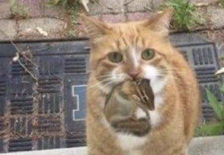 【w】リスと猫、仲良しのほのぼの写真が話題に