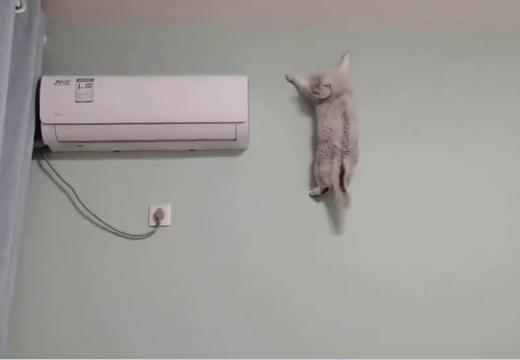 【動画】壁を降りてくる猫がすごすぎる「ムササビかと思ったw」