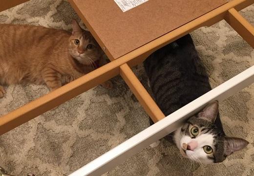 【w】こたつを撤去された猫達の表情が話題に「ごめん笑ったw」