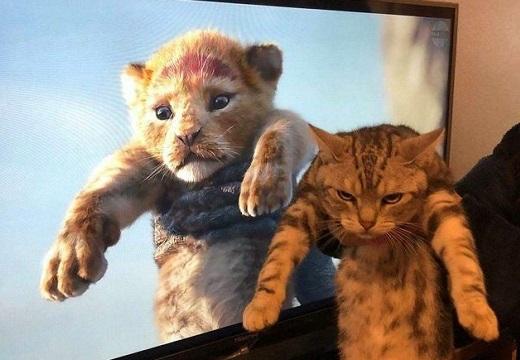 【ネコ科】ライオンぶった猫ちゃんが話題に「すごい顔w」