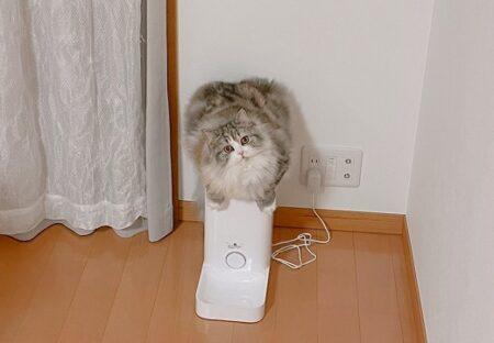 【w】自動給餌器のうえでスタンバってるふわふわ猫ちゃんが話題に「手が最高w」
