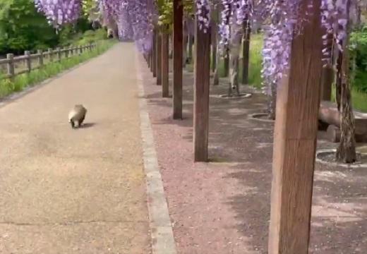 【タタタタッ】花の動画を撮ってたら‥隣を駆け抜けてった見たことない動物がカワイイw