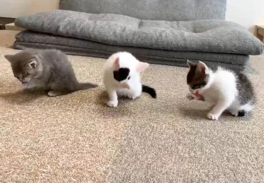 【ペロペロペロペロ】子猫3匹、食後の風景がカワイイすぎるw