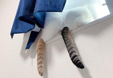【コラではない】並んだ猫のしっぽが奇跡的にかわいいw